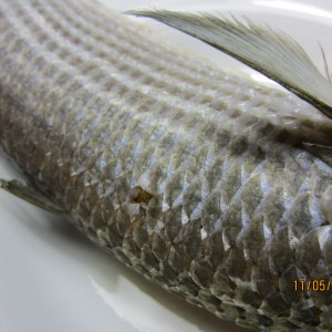 Steamed Grey Mullet